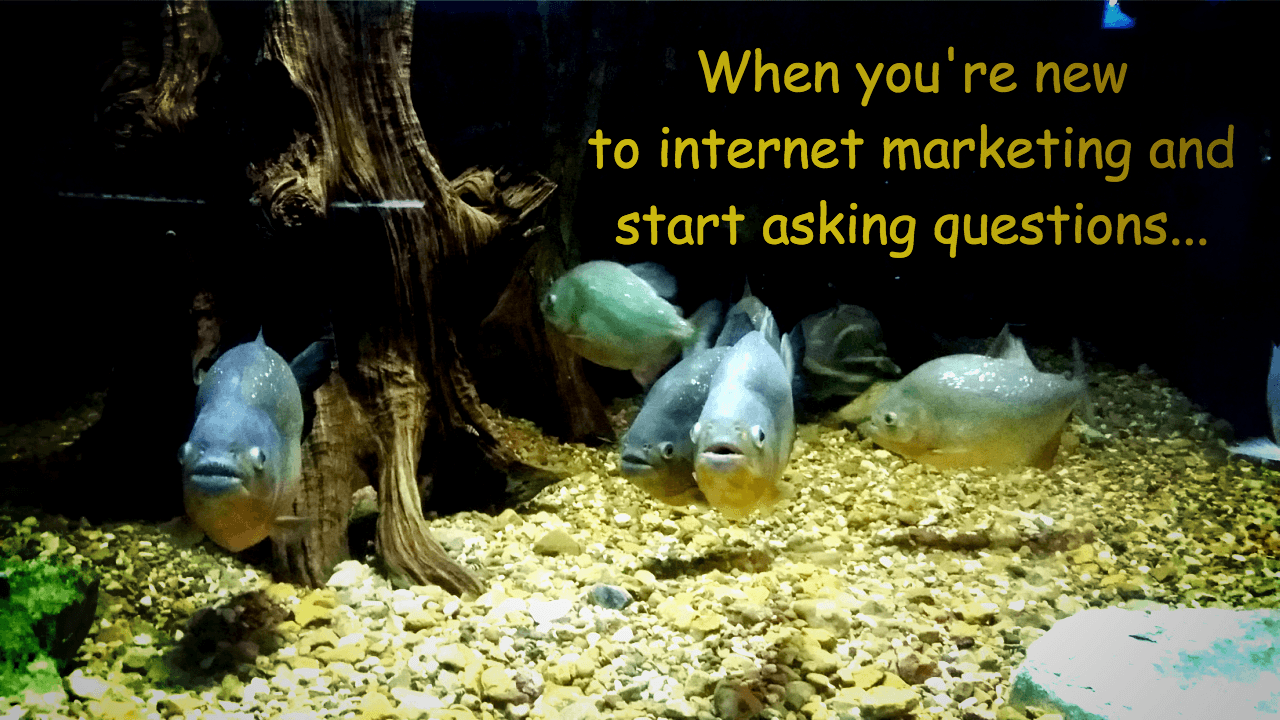 Internet marketing piranhas
