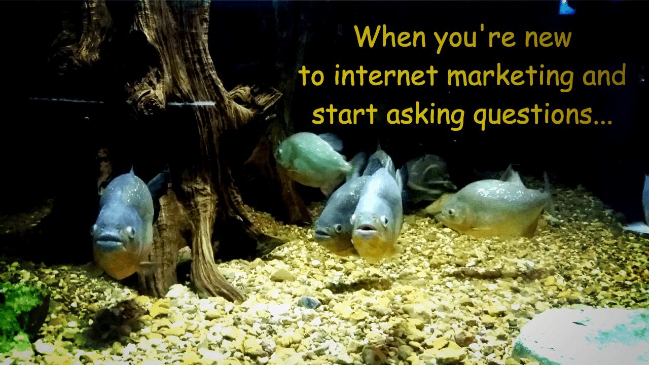 Internet marketing piranhas